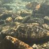防水仕様【 iPhone 7 Plus】で水中撮影 第二弾