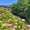 座禅川を歩く 平塚西部の穏やかな川