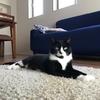 近況報告と野良猫観察記①