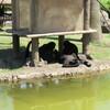 動植物園に出撃