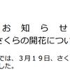 岐阜で19日に桜の開花を発表!満開は29日頃の予想!!