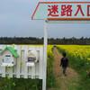 今年の西目の菜の花とHANA MARCHE