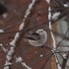 雪の訪問者