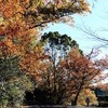 小幡緑地の冬景色