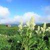 ◆'19/08/14     鳥海山・滝ノ小屋口からグルッと⑤…月山森~下山