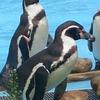 ペンギンになりたい