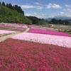 お花の絨毯♡魚沼芝桜まつり❀❀