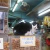 【香港:上環~西營盤】 自由すぎる猫との遭遇