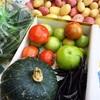 子供達も楽しみ❗️新鮮野菜の収穫〜レストラン Alte Schwimmhalle in Plön