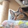 猫は昼間寝ています。(あたりまえですが)