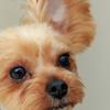 犬のコミュニケーション -ボディランゲージ(犬語)-