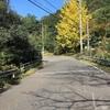 散歩でみつけた秋
