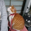 猫さんの保護作戦🎵