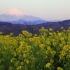 吾妻山公園菜の花撮影記2017(行ってみてわかったこと)