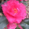 12月4日花と花言葉・歌句