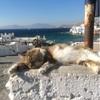 癒されるギリシャの風景やネコぉ☆バンコクのパッタイ発祥の店
