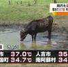 今年一番の暑さ!阿蘇では牛も暑い