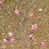 随心院・梅園と桜