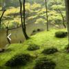 『金閣寺』を巡る旅 1-苔寺