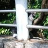 ◆今日の山猫達