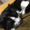 ★859鐘目『「猫は家族!」ではなく、「猫は親友!」と語る純粋な心に感動したでしょうの巻』【エムPのイケてる大人計画】