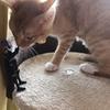 ネタフィギュアVSウチの飼い猫