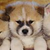 ブリーダー犬と保護犬の違い