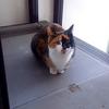 3日間連続で登場した三毛猫「三色丼」