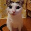 てんかん発作―実家の猫の話―