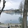 【写真】最近の写真撮影(2017/3/26)昆陽池公園その1
