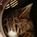 猫轍守衛の偽業務日報