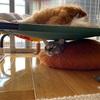 日曜日のイヌとネコ