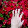 花に全然興味の無い俺がたくさんのツツジの花を愛でてみた 五大尊つつじ公園