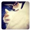 猫とブランケットとグワシ