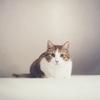もし療養・安静生活になったら何をする?③写真ブログならできることが判明。ネコで和みながら気づいたあれこれ。