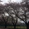 石神井公園を歩く②
