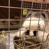 パンダちゃんの赤ちゃん すくすく成長中