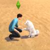 【獣医チャレンジvol.5】デヴィッドとアポロの休日