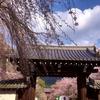 桜を見るならやっぱり京都!当ホテルおすすめ桜スポット2つをご紹介♪