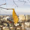 【一日一枚写真】冬を越した「秋」【一眼レフ】