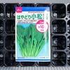 プラグトレイで「小松菜」を育てています。夏蒔きですが、上手く発芽するでしょうか?