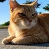 沖縄名護市で無料の猫カフェ!?野良猫と戯れる。