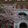 桜の季節のイギリスも良いな~