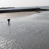 [地域] 銚子のはずれ (9)−9 遊べる学べる海岸 外川、マリーナ、屏風ヶ浦