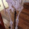 気が付くと同じ姿勢、骨の歪みが関係している可能性も。