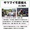 5月10日さつまい芋の定植予定!!