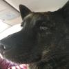 甲斐犬サン、大阪インターナショナルドッグショーへお出掛けするの巻〜そのワン(´⊙ω⊙`)びっくらこん‼️