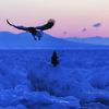 マヤ暦K195『心の状態を整える時間をもとう』~青い鷲~