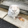 白猫、発見❗️