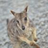 【2歳児連れ】2012年夏オーストラリア・ケアンズ旅行記④〜アサートン高原観光編